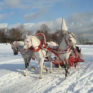 поздравления с новым годом лошади