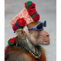 короткое поздравление от обезьяны, в картинках, мартышка