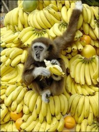 обезьяна с бананами, поздравления в картинках