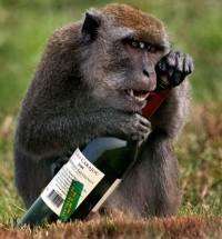 Поздравление с новым годом обезьяны