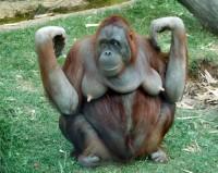 Поздравление с новым годом обезьяны смс