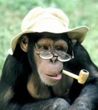 Поздравление с новым годом обезьяны шуточные
