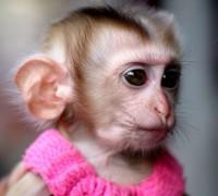Стихи про обезьяну в картинках