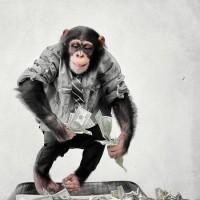 Картинки обезьяна