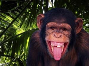 сценарий нового года обезьяны в джунглях