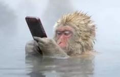 СМС поздравления к году обезьяны