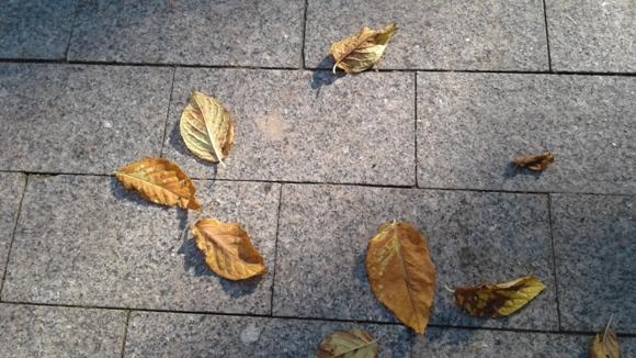 листопад, осенний