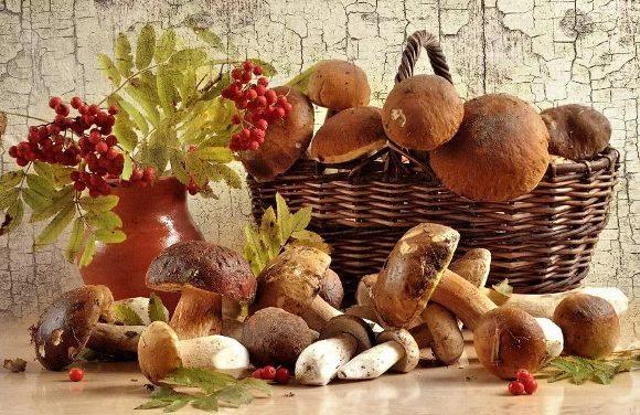 осенний урожай грибов и ягод