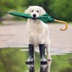 собака с зонтом