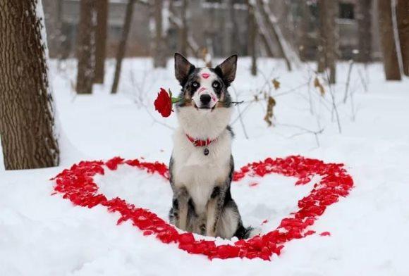 влюбленная собака