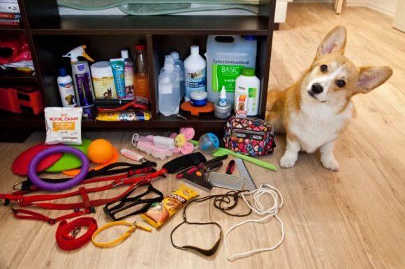 конкурс собачьи предметы