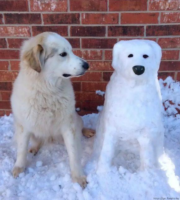 снегобака