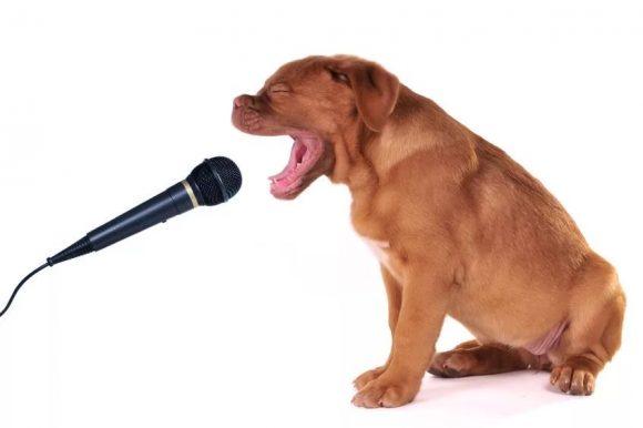 собака с микрофоном