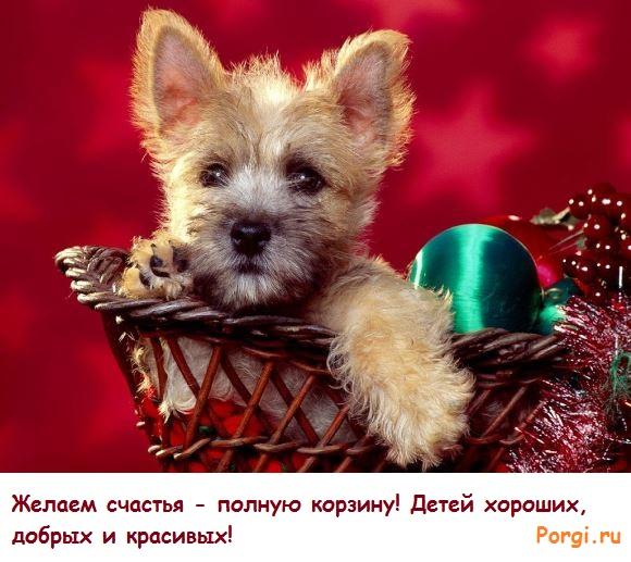 забавные фото собак для смс