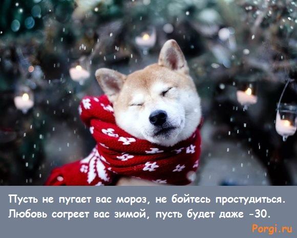 фото собаки и снежинок
