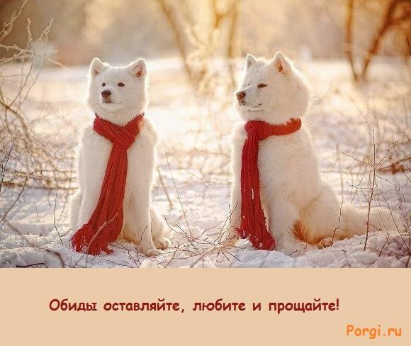 фото зимний пейзаж с собаками