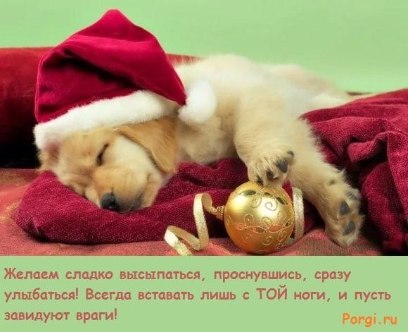 собачка в новогоднем колпаке
