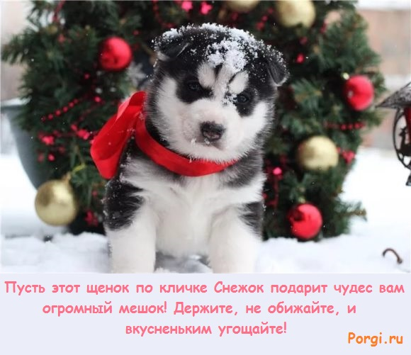 щенок по кличке Снежок