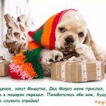 щенок с подарками в шапочке