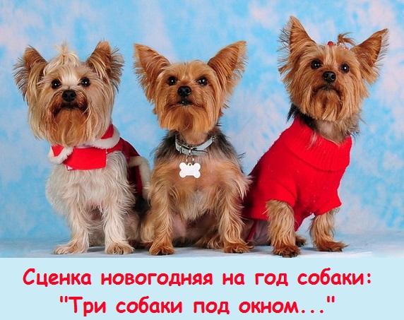 3 собачки