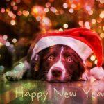 С Новым Годом собаки 2018 - прозой
