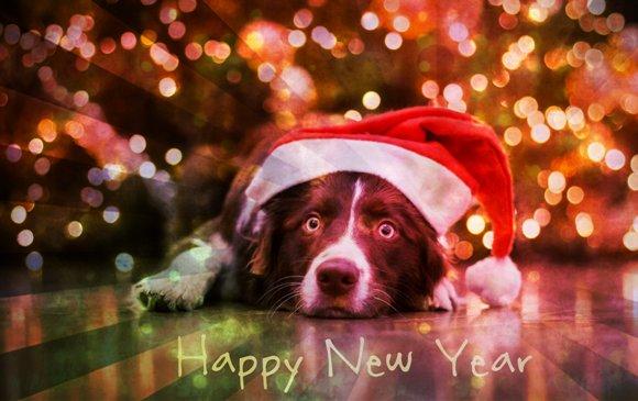С Новым Годом собаки 2030 - прозой