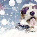 поздравления проза на год собаки