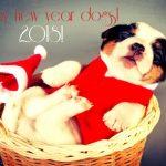 ретро открытка к новому году собаки