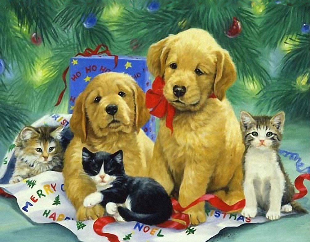 Открытки собаками кошками, картинки