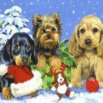 открытка с собаками