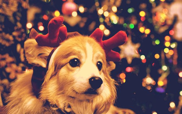 красивые стихи поздравления к году собаки