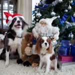 Собаки и подарки к НГ