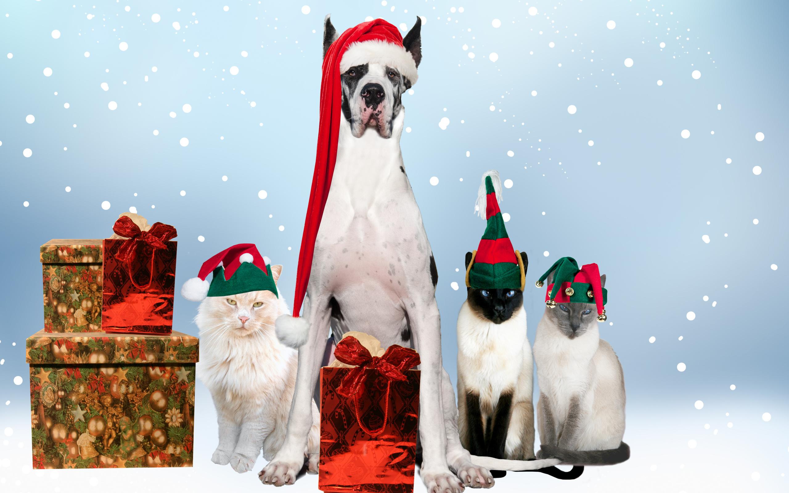 Новые открытки с новым годом с животными