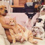 Рыжий кот и собаки