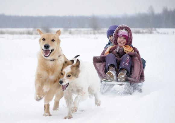 Поздравления с новым годом собаки школьникам от учительницы