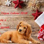 коллегам красивые поздравления на год собаки в картинках