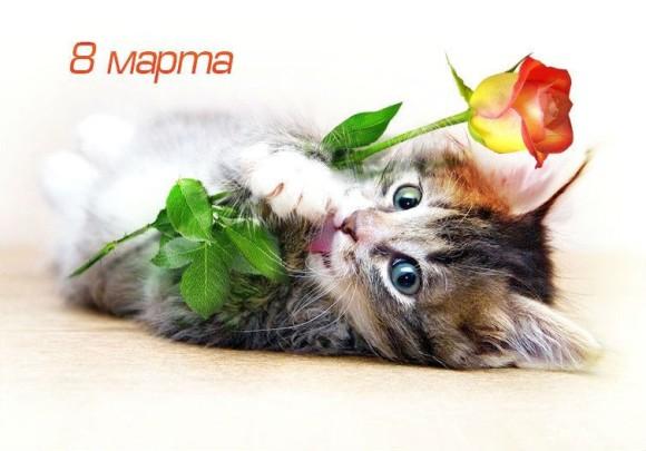 котенок с розой