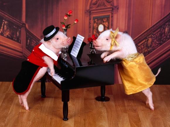 умные свинки
