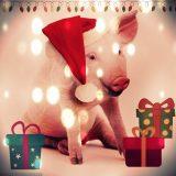 Сценарий на Новый Год Свиньи: «Свинячий Новый Год»