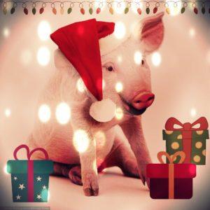свинья Новый Год