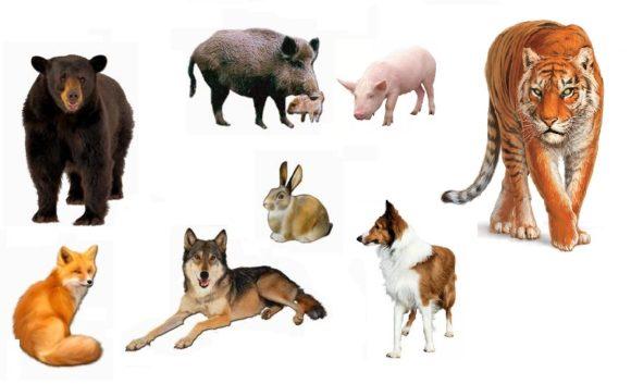 сказка про свинью