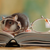 Познавательный сценарий на Новый Год Крысы для умников и умниц