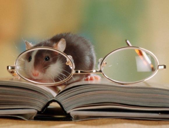 Интеллектуальный сценарий конкурсов и игр на год крысы (мыши)