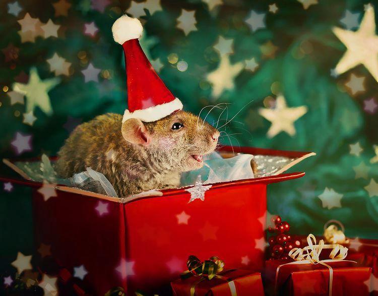 конкурсы, викторины год белой крысы
