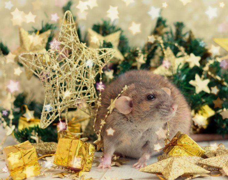 новогодние викторины на мышиную тематику