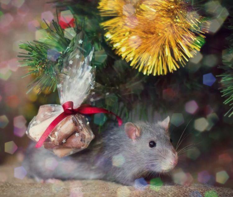конкурсы год мыши
