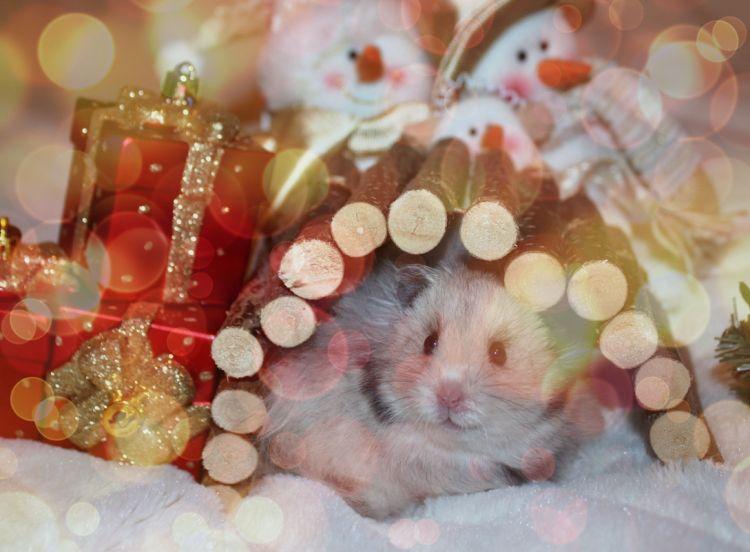 конкурсы год мышей, крыс