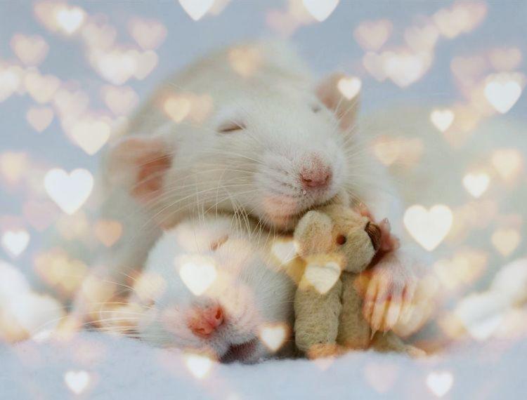 конкурсы на новый год крысы