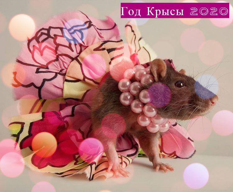 загадки про мышей, крыс, грызунов