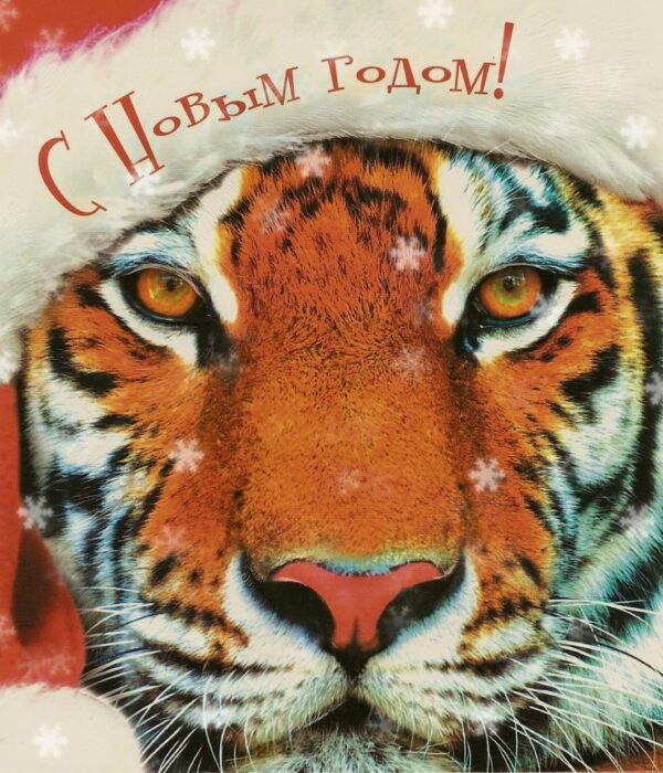 Конкурсы в год Тигра взрослым